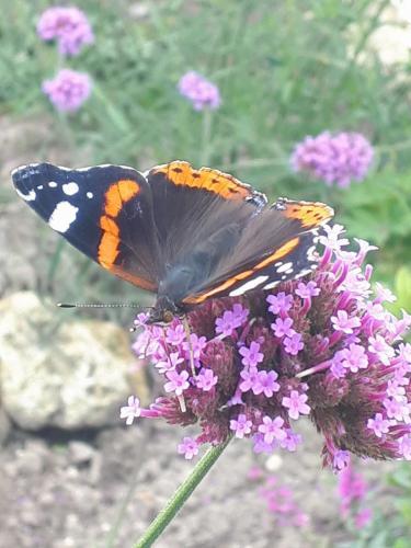 vlinders in de wellness tuin